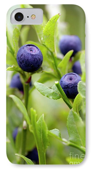 Blueberry Shrubs Phone Case by Michal Boubin