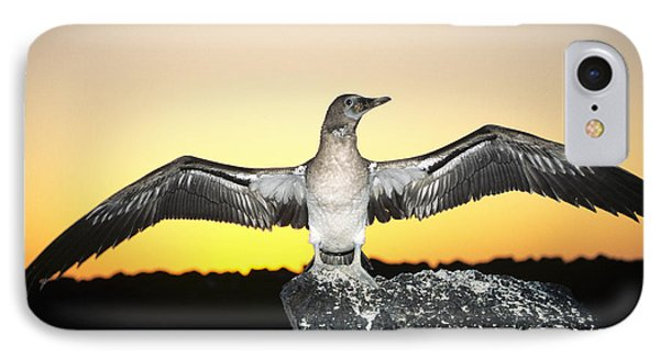 Booby At Sunset IPhone Case by Dave Fleetham - Printscapes
