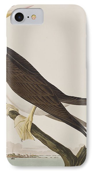 Booby Gannet   IPhone Case by John James Audubon