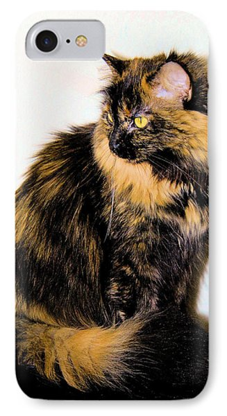 Calico Cats Phone Case by Cheryl Poland
