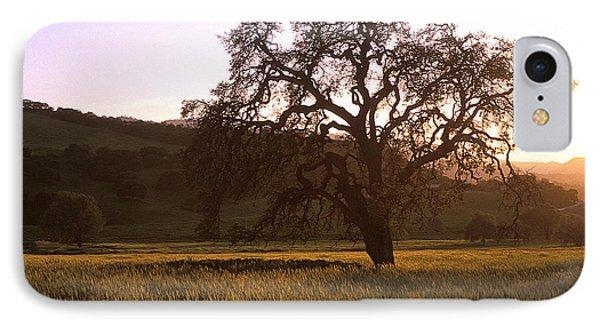 California Hwy 25 Oak Phone Case by Kathy Yates