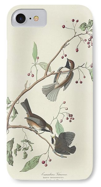 Canadian Titmouse IPhone Case by John James Audubon