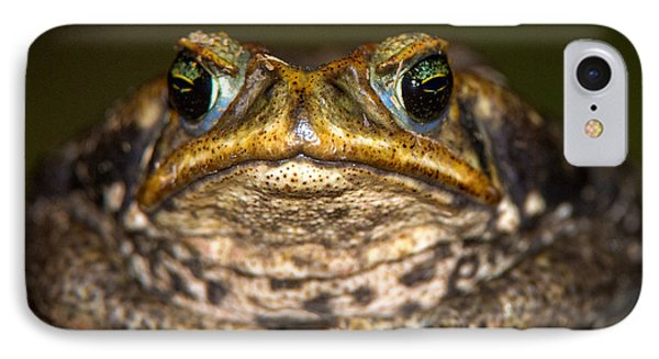 Cane Toad Rhinella Marina, Pantanal IPhone Case by Panoramic Images