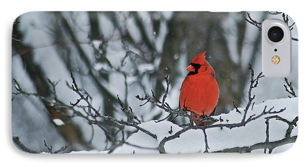 Cardinal And Snow IPhone 7 Case by Michael Peychich