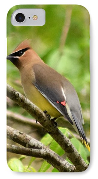 Cedar Wax Wing 1 IPhone Case by Sheri McLeroy