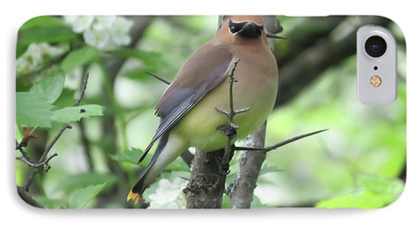 Cedar Wax Wing IPhone 7 Case by Alison Gimpel