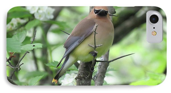 Cedar Wax Wing IPhone Case by Alison Gimpel