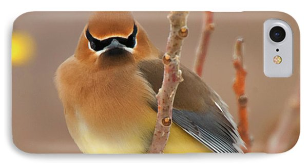 Cedar Wax Wing IPhone Case by Carl Shaw