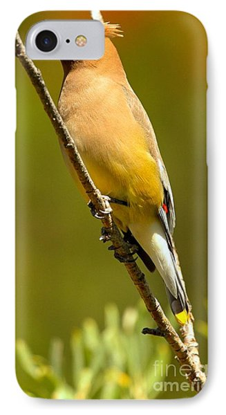 Cedar Waxwing IPhone Case by Adam Jewell