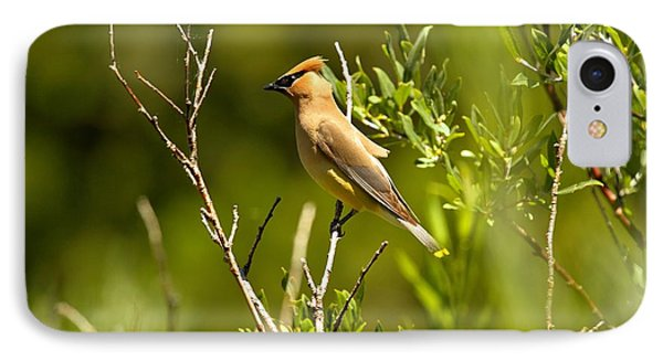 Cedar Waxwing At Glacier IPhone Case by Adam Jewell