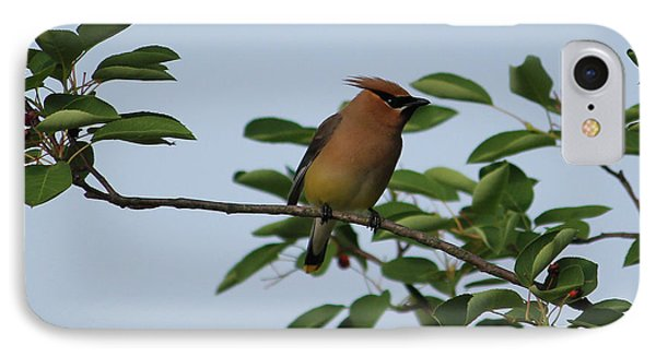 Cedar Waxwing Profile IPhone 7 Case by Mark A Brown