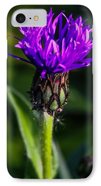 Centaurea Montana 2 IPhone Case by Mo Barton
