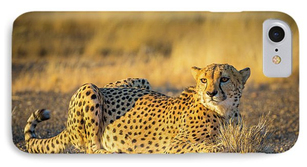 Cheetah Portrait IPhone 7 Case by Inge Johnsson