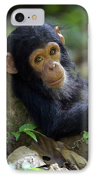 Chimpanzee Pan Troglodytes Baby Leaning IPhone Case by Ingo Arndt