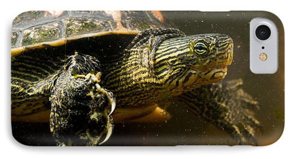 Chinese Pond Turtle IPhone Case by B.G. Thomson
