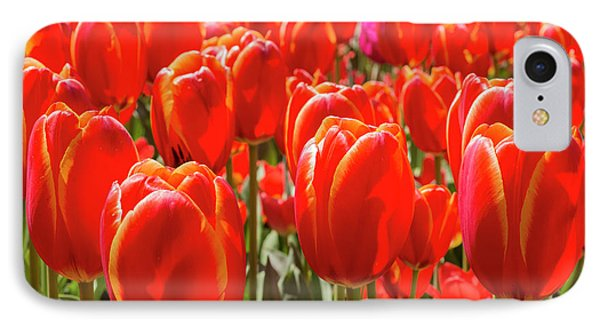 Close Up Double Toronto Tulips IPhone Case by Jamie Adams