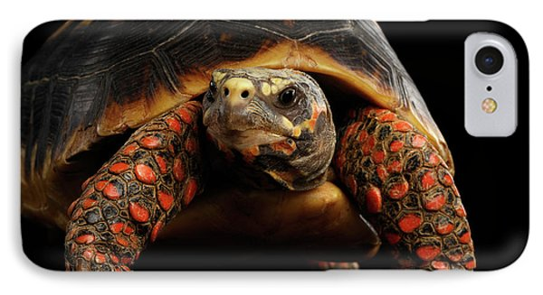 Close-up Of Red-footed Tortoises, Chelonoidis Carbonaria, Isolated Black Background IPhone 7 Case by Sergey Taran