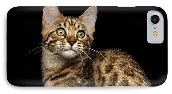 Closeup Bengal Kitty On Isolated Black Background IPhone Case by Sergey Taran