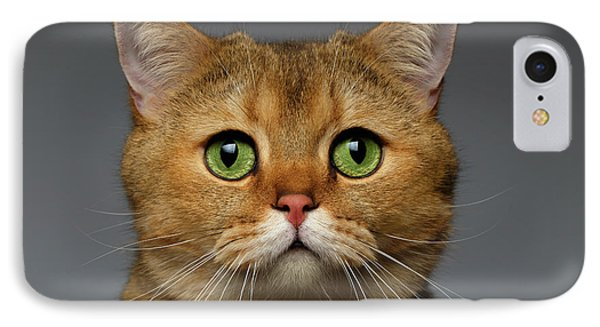 Closeup Golden British Cat With  Green Eyes On Gray IPhone Case by Sergey Taran