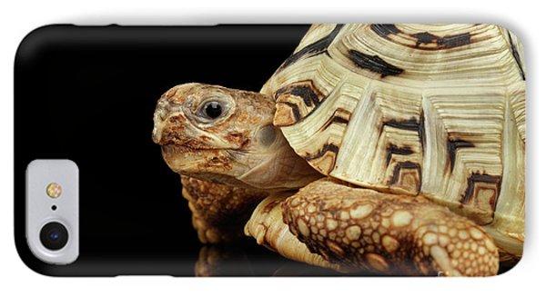 Closeup Leopard Tortoise Albino,stigmochelys Pardalis Turtle With White Shell On Isolated Black Back IPhone Case by Sergey Taran