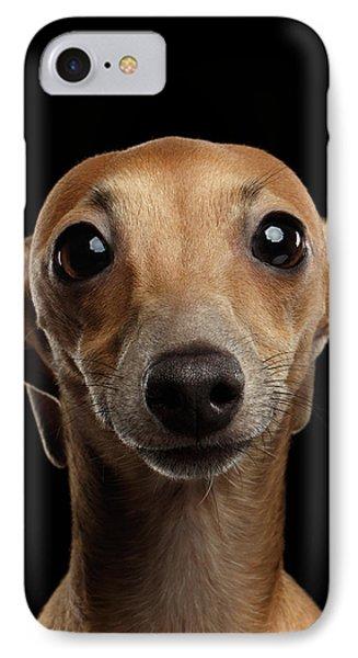 Closeup Portrait Italian Greyhound Dog Looking In Camera Isolated Black IPhone Case by Sergey Taran