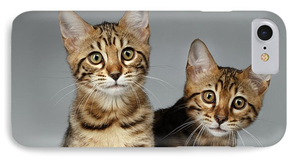 Closeup Portrait Of Two Bengal Kitten On White Background IPhone Case by Sergey Taran