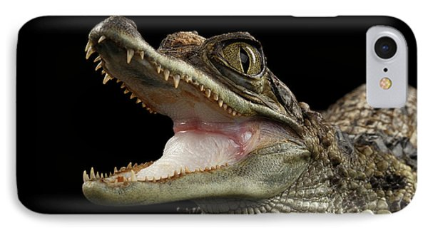 Closeup Young Cayman Crocodile, Reptile With Opened Mouth Isolated On Black Background IPhone 7 Case by Sergey Taran