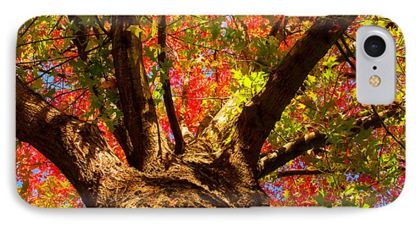 Colorful Autumn Abstract IPhone Case by James BO  Insogna