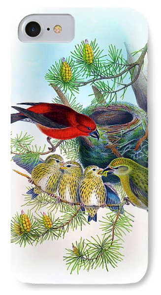 Common Crossbill Antique Bird Print John Gould Hc Richter Birds Of Great Britain  IPhone Case by Orchard Arts