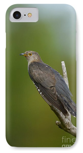 Common Cuckoo IPhone Case by Steen Drozd Lund