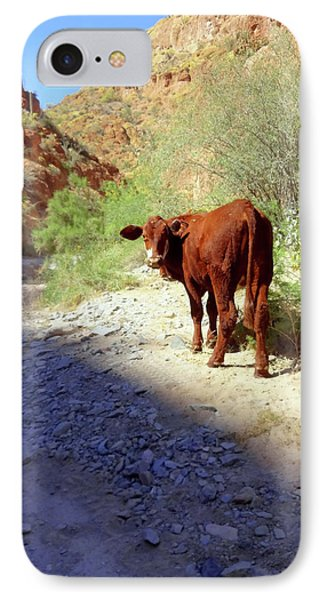Cow In The Canyon IPhone Case by Susan Lafleur