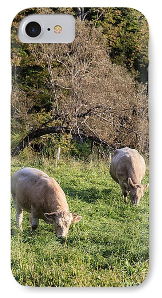Cows Grazing In A Field Etna Nh IPhone Case by Edward Fielding