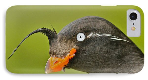 Crested Auklet IPhone Case by Desmond Dugan/FLPA