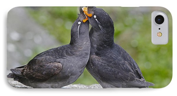Crested Auklet Pair IPhone Case by Desmond Dugan/FLPA