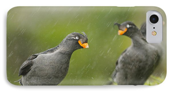 Crested Auklets IPhone Case by Desmond Dugan/FLPA