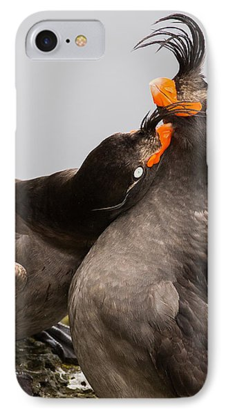 Crested Auklets IPhone Case by Sunil Gopalan