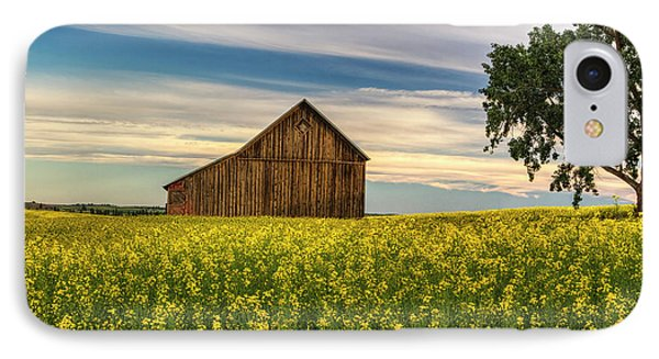 Dazzling Canola In Bloom IPhone Case by Mark Kiver
