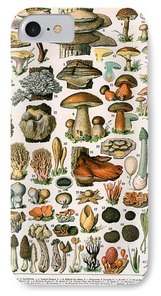 Decorative Print Of Champignons By Demoulin IPhone 7 Case by American School
