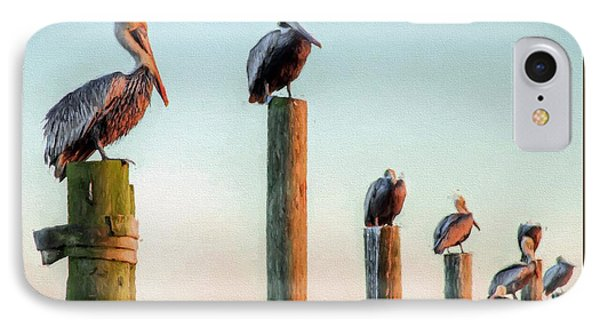 Destin Pelicans-the Peanut Gallery IPhone Case by JC Findley