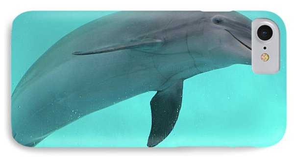 Dolphin IPhone Case by Sandy Keeton