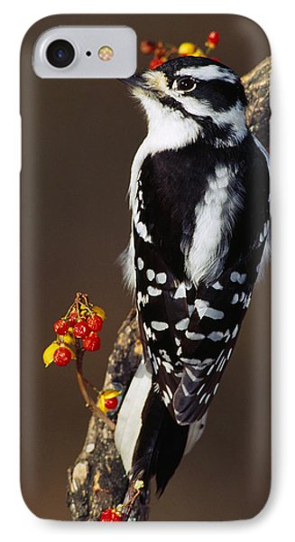 Downy Woodpecker On Tree Branch IPhone 7 Case by Panoramic Images