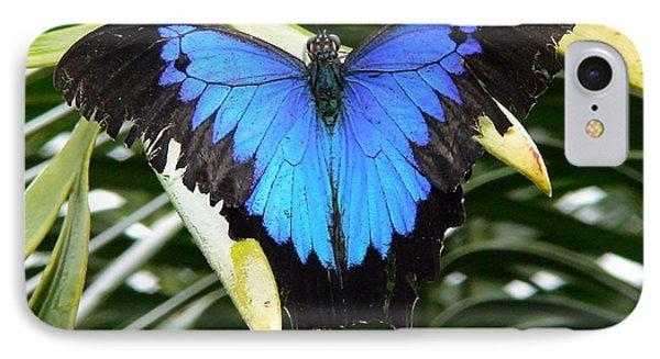 Dunk Butterfly In Oz IPhone Case by D Scott Fern