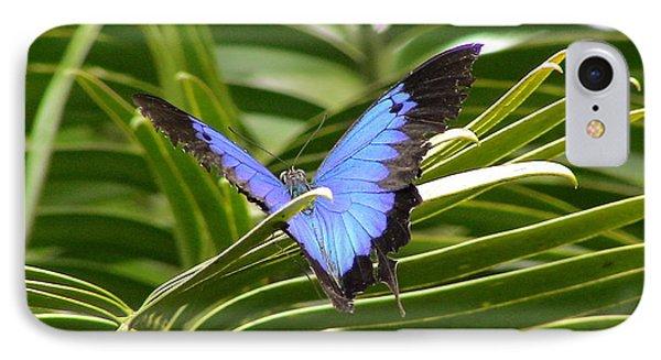 Dunk Butterfly Resting IPhone Case by D Scott Fern