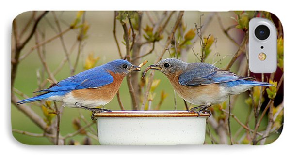Early Bird Breakfast For Two IPhone Case by Bill Pevlor