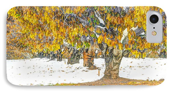 Early Winter In The Cherry Orchard IPhone Case by F Four