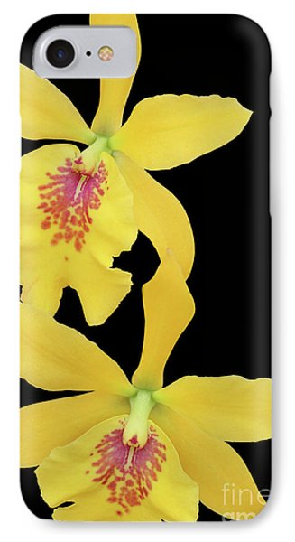 Epilaeliocattleya Don Herman Gold Rush IPhone Case by Judy Whitton