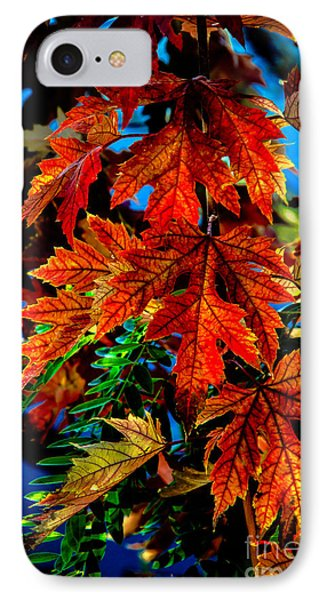 Fall Reds Phone Case by Robert Bales