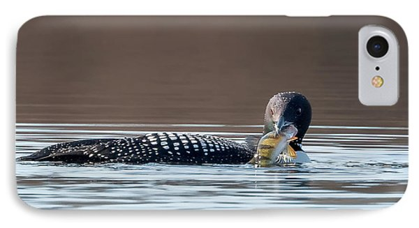 Feeding Common Loon Square IPhone 7 Case by Bill Wakeley