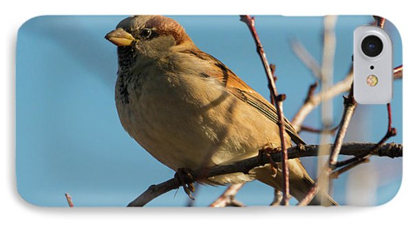 Female House Sparrow IPhone 7 Case by Mike Dawson