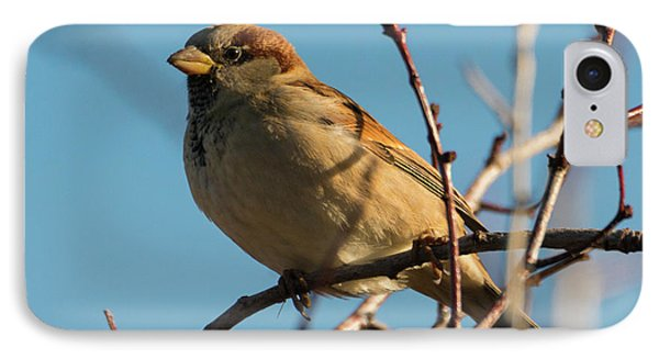 Female House Sparrow IPhone Case by Mike Dawson